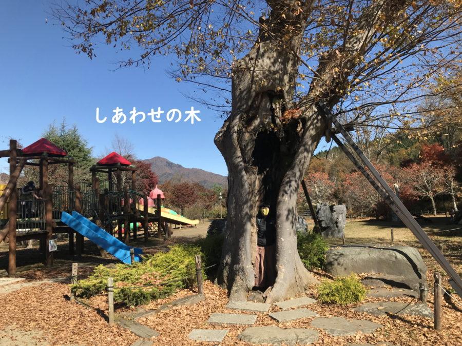 幸せな写真_花の都公園_山中湖村