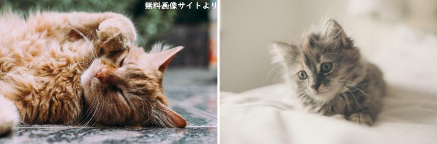 猫ちゃん画像かわいい